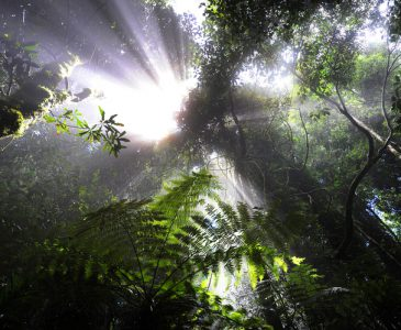 Rays In The Rainforest