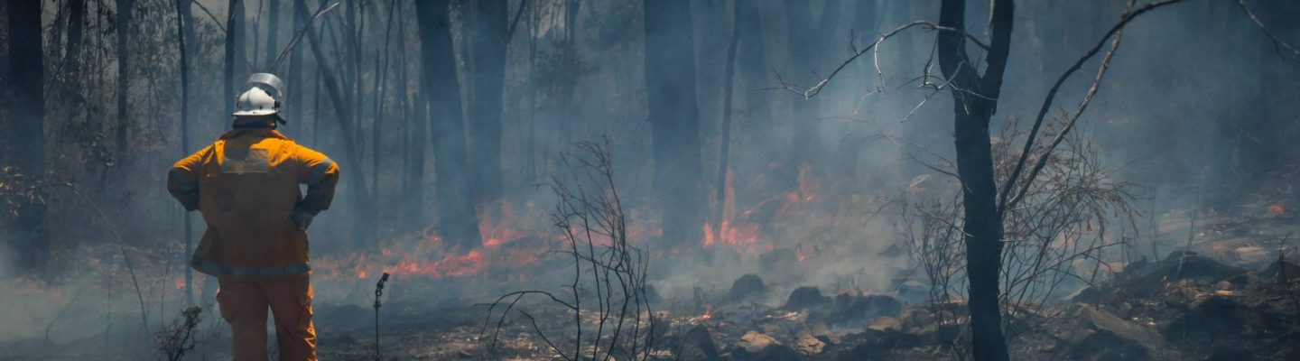 Bushfire Recovery – How to Help